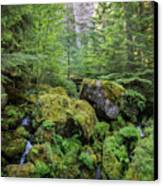 The Green Scene Canvas Print by Carrie Cole