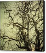The Haunted Tree Canvas Print by Lisa Russo