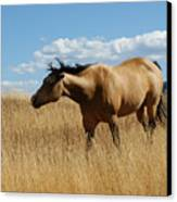 The Horse Canvas Print by Ernie Echols