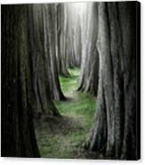 The Pathway Canvas Print by Ian David Soar