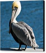 The Pelican Canvas Print by Steven Gray