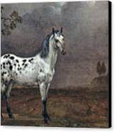 The Piebald Horse Canvas Print by Paulus Potter