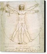 The Proportions Of The Human Figure  Canvas Print by Leonardo Da Vinci