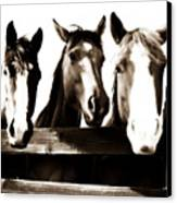 The Three Amigos In Sepia Canvas Print by Steve Shockley