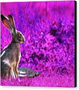 The Tortoise And The Hare . Magenta Canvas Print by Wingsdomain Art and Photography