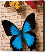 Three Butterflies Canvas Print by Garry Gay