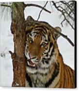 Tiger 3 Canvas Print by Ernie Echols