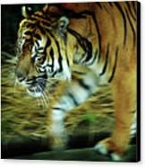 Tiger Burning Bright Canvas Print by Rebecca Sherman