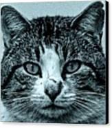 Tom Cat Canvas Print by Tony Grider
