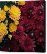 Touch Of Fall Canvas Print by Evelyn Patrick