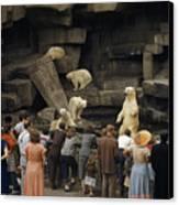 Tourists Watch Captive Polar Bears Canvas Print by B. Anthony Stewart