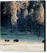 Trail Of Bulls Canvas Print by Jan Amiss Photography