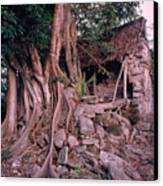 Tree And Ruins In Cozumel Canvas Print by Thomas Firak