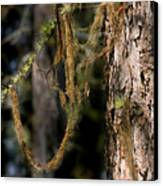 Tree Moss - Green Soft Beauty Canvas Print by Christine Till