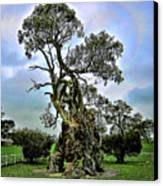 Treehouse Canvas Print by Douglas Barnard