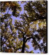 Trees Conversing Canvas Print by Deborah  Crew-Johnson