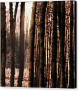 Trees Gathering Canvas Print by Wim Lanclus