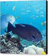 Tropical Reef Fish Canvas Print by Georgette Douwma