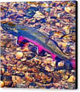 Trout Stream Canvas Print by Terril Heilman