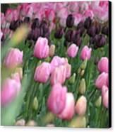 Tulip Dreams Canvas Print by Louise Magno