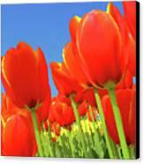 Tulip Field Canvas Print by Giancarlo Liguori