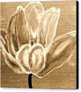 Tulip In Brown Tones Canvas Print by Marsha Heiken