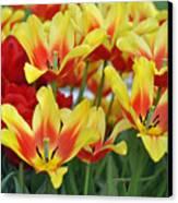 Tulips Glorious Tulip Monsella Canvas Print by Debra  Miller