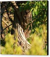 Twisted Tree Canvas Print by Alan Look