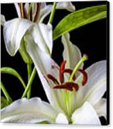 Two Wonderful Lilies  Canvas Print by Garry Gay