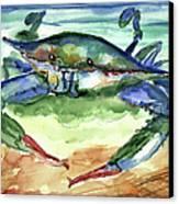 Tybee Blue Crab Canvas Print by Doris Blessington