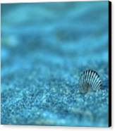 Underwater Seashell - Jersey Shore Canvas Print by Angie Tirado