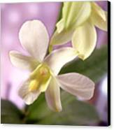 Unique White Orchid Canvas Print by Mike McGlothlen