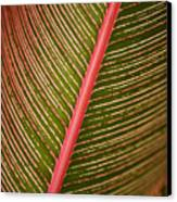 Variegated Ti-leaf 2 Canvas Print by Ron Dahlquist - Printscapes