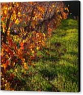 Vineyard 13 Canvas Print by Xueling Zou
