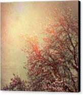 Vintage Cherry Blossom Canvas Print by Wim Lanclus