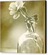Vintage Geranium Canvas Print by Amy Neal