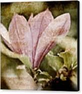Vintage Magnolia Canvas Print by Frank Tschakert