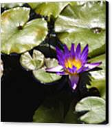 Vivid Purple Water Lilly Canvas Print by Teresa Mucha