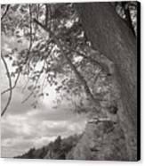 Walden Pond Canvas Print by Heather Weikel