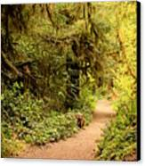 Walk Into The Forest Canvas Print by Carol Groenen