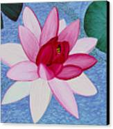 Water Lilly Canvas Print by Loraine LeBlanc