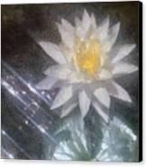 Water Lily In Sunlight Canvas Print by Jeff Kolker