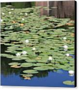 Water Lily Pond Canvas Print by Carol Groenen
