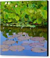 Water Lily Sky Canvas Print by Nada Frazier
