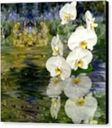 Water Orchid Canvas Print by Tom Romeo