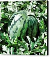 Waterelons In A Vegetable Garden Canvas Print by Lanjee Chee