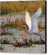 Wetland Heron Canvas Print by Graham Gercken