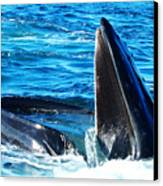 Whale's Opening Mouth Canvas Print by Paul Ge