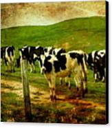 When The Cows Come Home . Photoart Canvas Print by Wingsdomain Art and Photography
