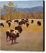 Where The Buffalo Roam Canvas Print by Tate Hamilton